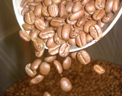 ITALIAN ESPRESSO COFFEE (FULL CITY ROAST, LIGHT OIL)